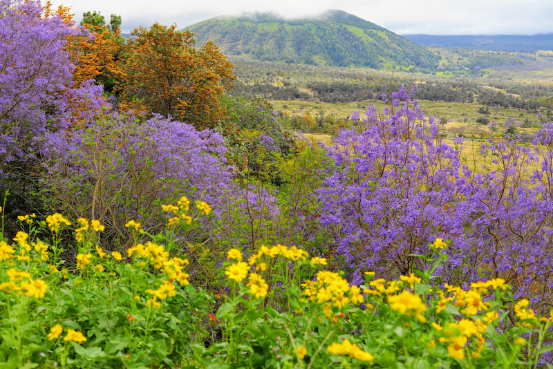 Pu'u anahulu プウアナフル ハワイ島の美しい場所、美しい季節。